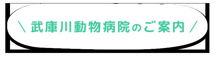 武庫川動物病院のご案内